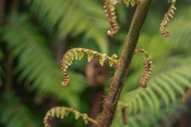 Close-up of fern on tree