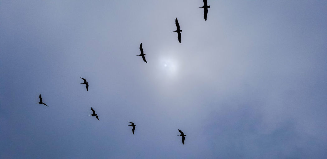 pelicans in formation Rays Of Light Pelican Animals Abstract Streetphotography EyeEm Nature Lover Street Photography EyeEm Best Shots Bird Flamingo Flying Bird Of Prey Vulture Togetherness Flock Of Birds Spread Wings Sports Team Mid-air Formation Flying Animal Migration Migrating Following