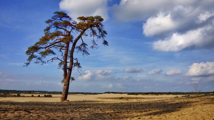Holland Veluwe Forest In The Forest Tree Tree And Sky Sand Cloudy Cloud_collection  Cloud Cloud And Sky Lonely Romantic Colour Colours Eyem Gallery 35 Mm Film Peace And Quiet Special Moment From My Point Of View Sony NEX Landscapes Landscape_Collection Green Green Green!