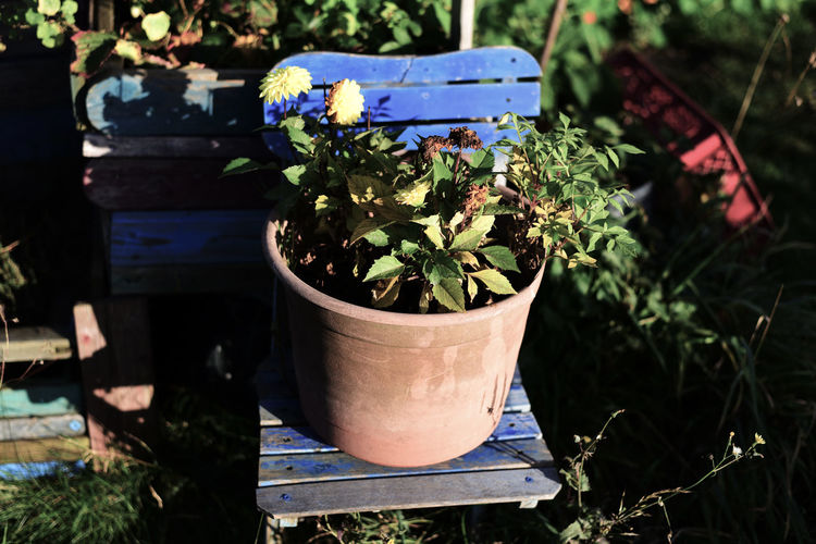 Beauty In Nature Berlin Blue Chair Close-up Day Flower Flower Head Flower Pot Fragility Freshness Growth Nature Nature_collection No People Outdoors Plant Potted Plant Urban Gardening Yellow