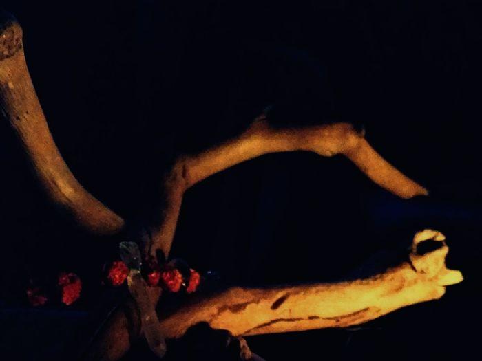 Offerings Offering Pagan Paganism Driftwood Rowanberries Quartz Bone  Mysticism Altar