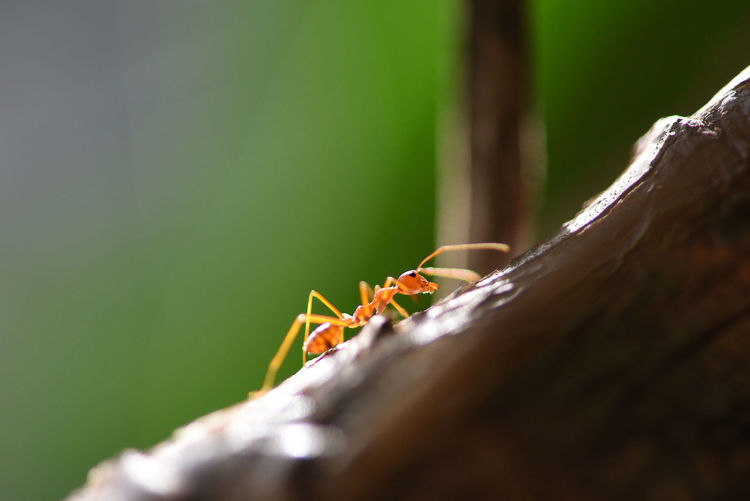 Close-up of ant on tree trunk