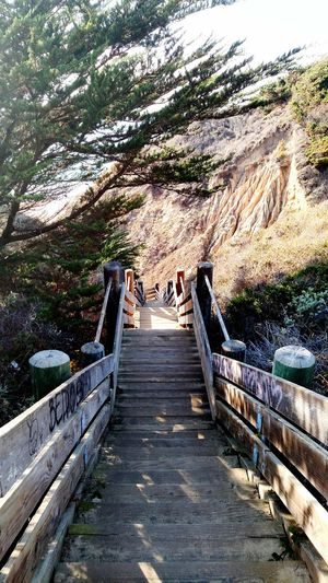 Hanging Out Check This Out Hello World Relaxing Hi! Enjoying Life EyeEm Best Shots Photograph Everything Taking Photos Trees Walking Stairs In Nature Stairs Beach