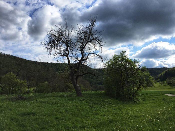 Obstbaum im