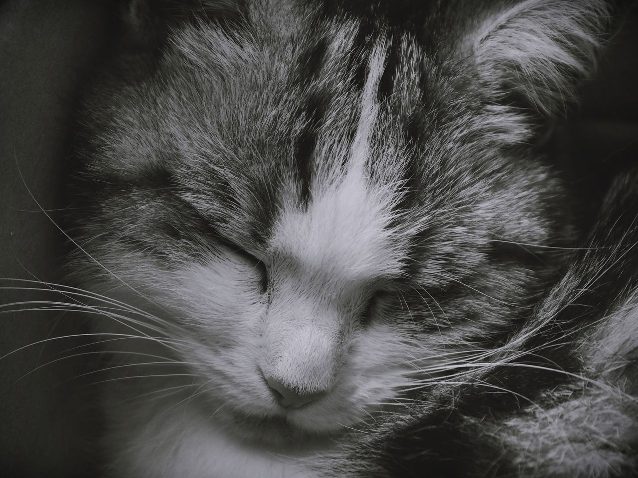 pets, domestic animals, domestic cat, animal themes, mammal, one animal, sleeping, eyes closed, feline, relaxation, cat, whisker, close-up, indoors, no people, day