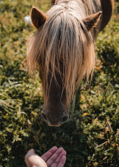 Close-up of a horse in a field