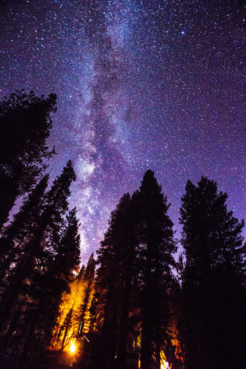 Astronomy Beauty In Nature Campfire Constellation Forest Galaxy Glowing Illuminated Infinity Low Angle View Majestic Nature Night Outdoors Scenics Silhouette Sky Star - Space Star Field Tall Tourism Tranquil Scene Tranquility Travel Destinations Tree