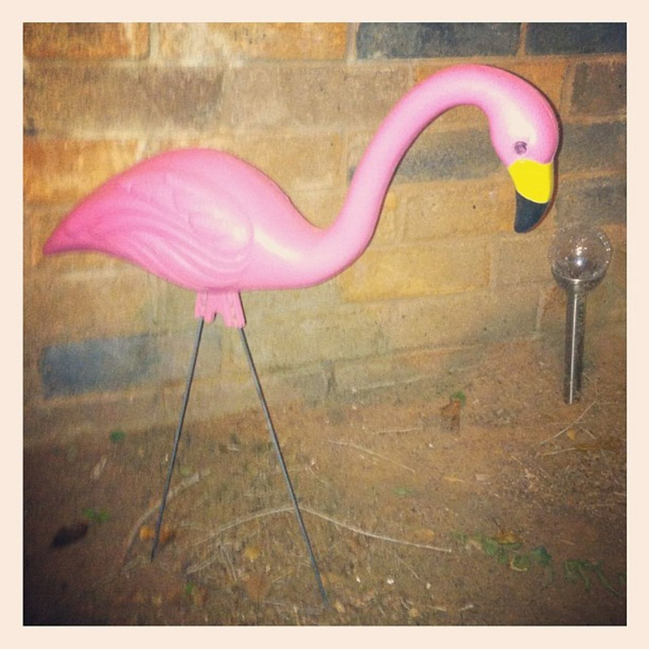 pink color, no people, day, close-up, outdoors, water, flamingo, animal themes