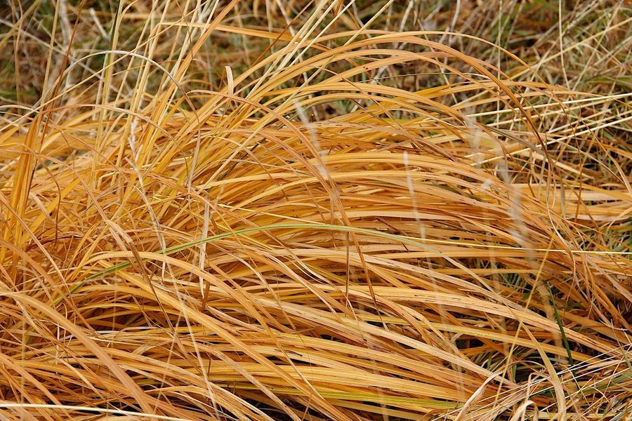 Backgrounds Beauty In Nature Brown Close-up Day Dry Field Full Frame Grass Growth High Angle View Land Nature No People Outdoors Plant Tranquility