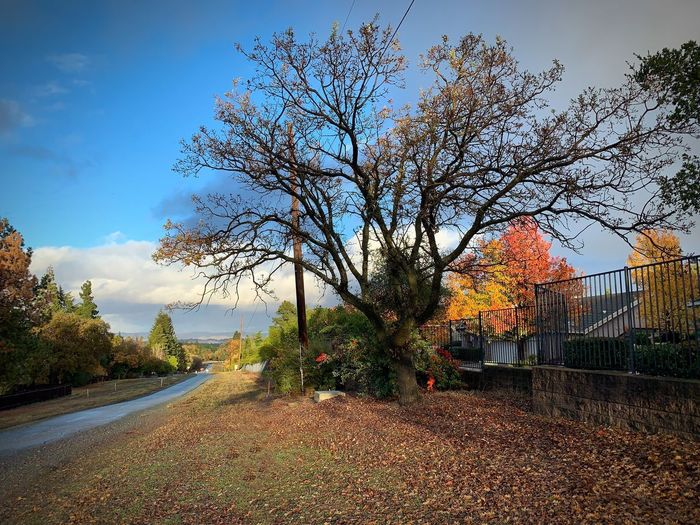 """Suburban Walk"" After a rain the asphalt of a suburban open space path glistens and Autumn showcases its colors in every direction. Clouds Rain Open Space Trail Paths Fall Colors Fall Autumn colors Autumn Sky Tree Nature Growth No People Day Beauty In Nature Outdoors Tranquility Autumn"