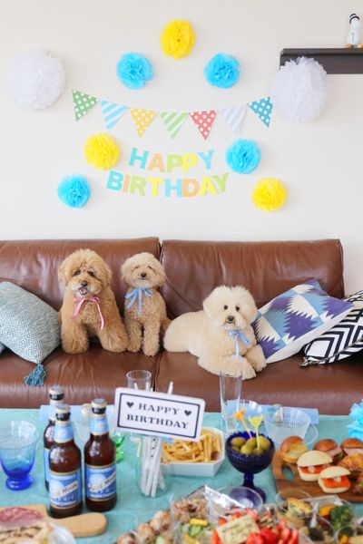 DogLove My Toypoodle Cutedogs Enjoying Life Birthday Party HappyBirthday Toypoodle I Love My Dog Cute Pets Dogs Japan