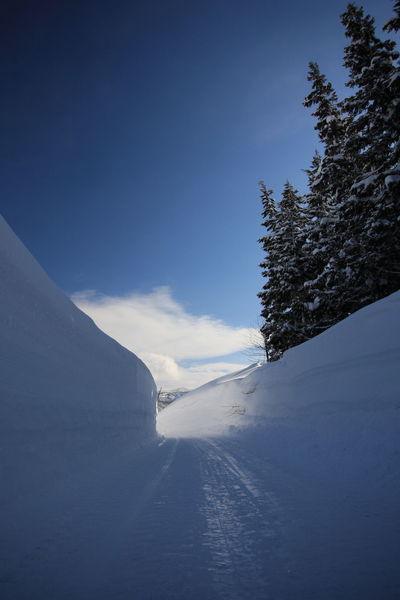 2012年長野県飯山市の雪 Nature Snow Winter Beauty In Nature Winter Photography Winter Photos Nagano Japan Photography Japan Snow Photography