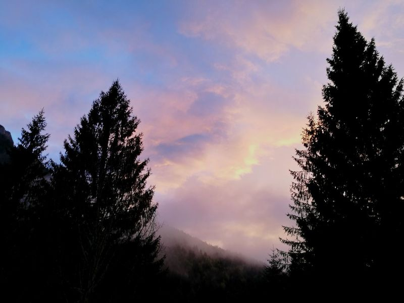 Tree Pinaceae Silhouette Cloud - Sky Nature Pine Tree Sky Outdoors No People Sunset Forest Low Angle View Beauty In Nature Day Asiago Clouds And Sky Clouds Pinkclouds Sunsetlover Sunset Photography
