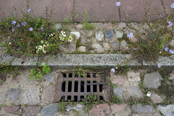 GULLY Gully Cover Gutter Architecture Building Exterior Built Structure Day Flower Gullydeckel Nature No People Outdoors Plant Street Tree