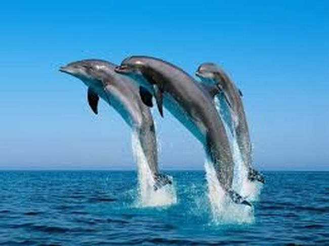 Sea Water Motion Blue Animal Themes Waterfront Wave Splashing Nature Day Beauty In Nature Scenics Outdoors Zoology Tranquility No People Seascape Non-urban Scene Animal Behavior