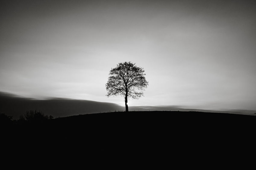 Tree Sky Silhouette Plant Tranquility Tranquil Scene Beauty In Nature Scenics - Nature Land Landscape Environment Nature No People Non-urban Scene Solitude Single Tree Outdoors Remote Copy Space Bare Tree Isolated