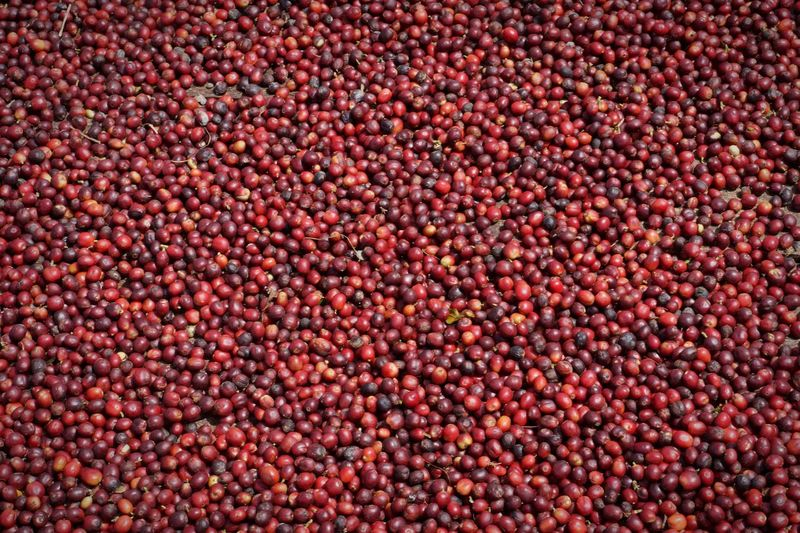 Coffee Beans in Process ! 👌🏻🍒🌿 Backgrounds Food And Drink Abundance Textured  Large Group Of Objects Freshness Brown Heap Red Geometric Shape No People Multi Colored Collection #coffee  Colombia Coffee Time Beans Quindío Coffee
