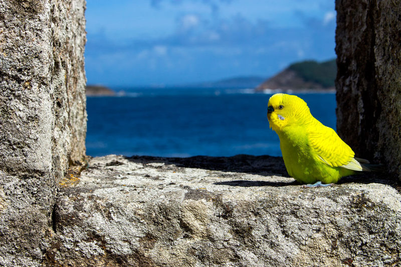 Parakeet perching on rock formation against sea and sky during sunny day