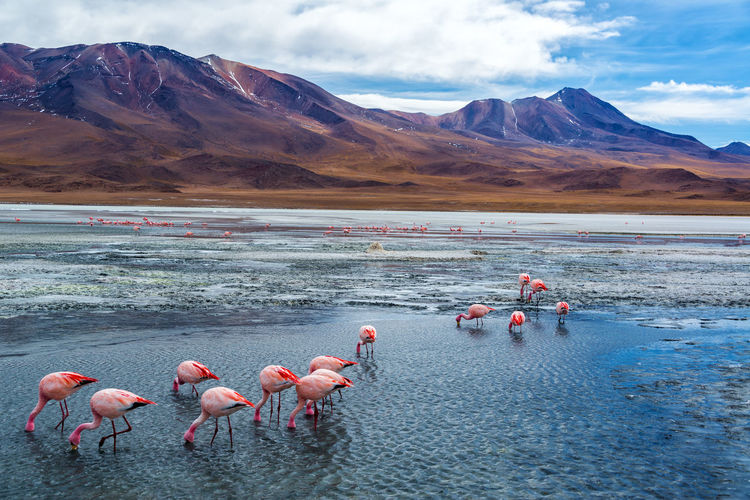 Flamingos in lake hedionda against mountains