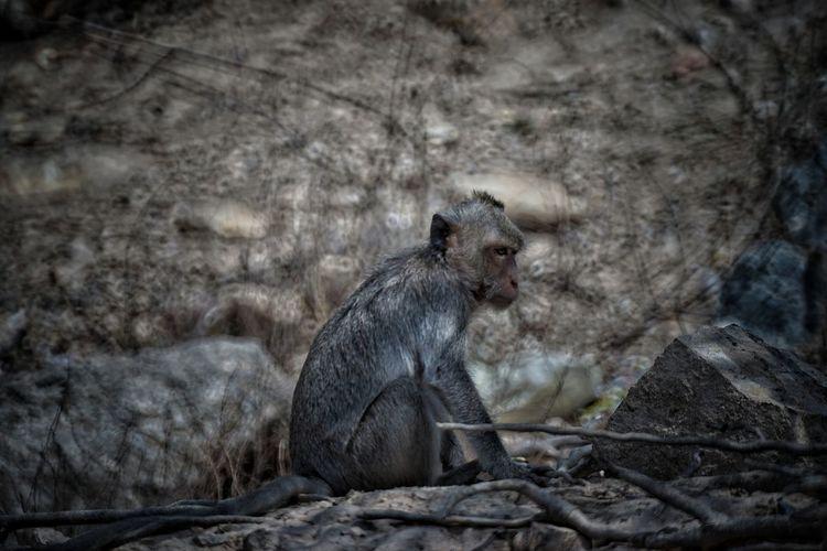 monkey portrait Monkey Sky Safari Animals Animal Trunk