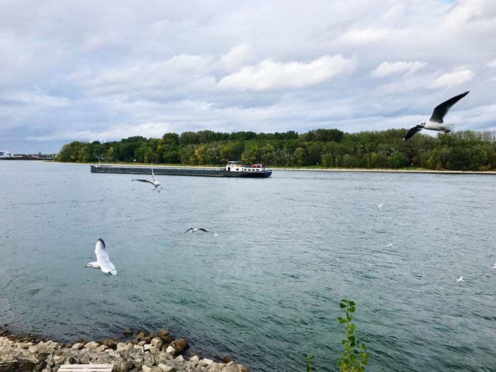 Seagulls flying over lake against sky