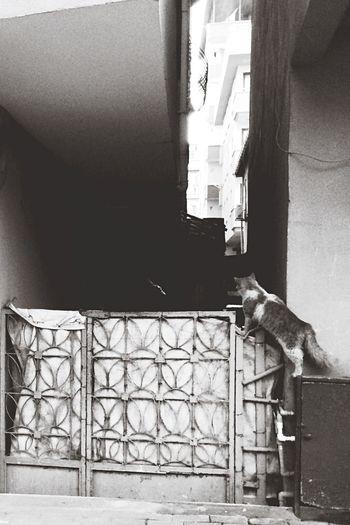 Cat Animal Who Black Kedi 😱