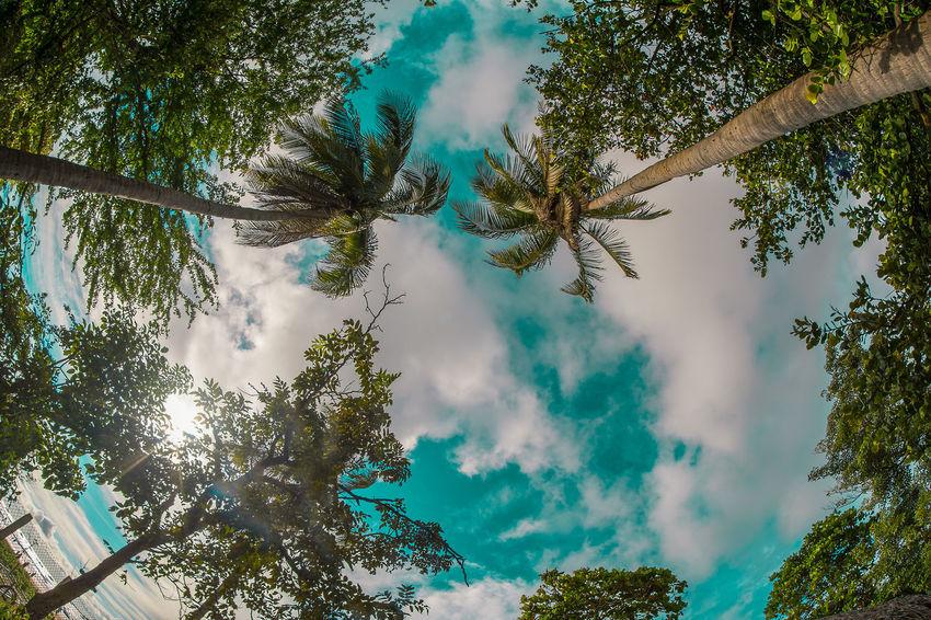 Una vista diferente de las palmeras en playa tamarindo en guanacaste Costa Rica Beauty In Nature Blue Day Low Angle View Nature No People Outdoors Sky Tree