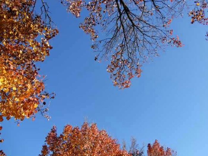 Nature Sky Trees Leaves Fall Naturehippys Best Of Fall