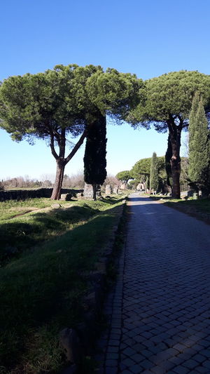 Via Appia Antica Tree Sky