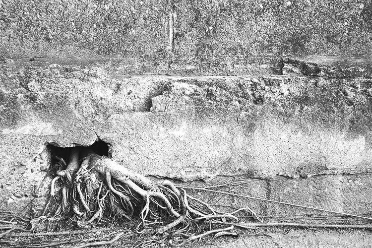我們眼睛忽略的,隨著時光緩緩前進,寂靜之地。 Nature Tree Root Roots Of Tree Life Continuation Cement Cement Wall Wall Silence Silent