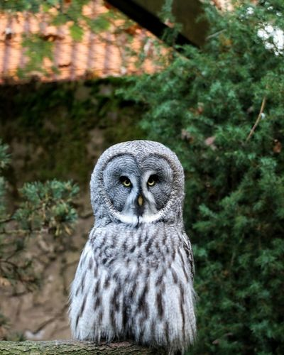 Eye Owl One