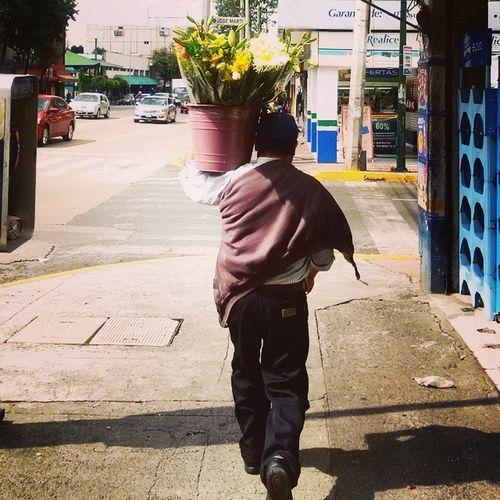 Let's walk, Let's work Monday Flowers Flores Mexicolours mexicodf mexico df
