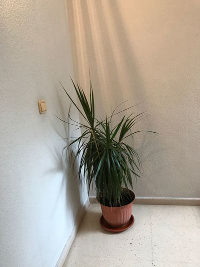 EyeEm Selects Potted Plant Growth Plant Wall - Building Feature Indoors  No People Day Nature Architecture