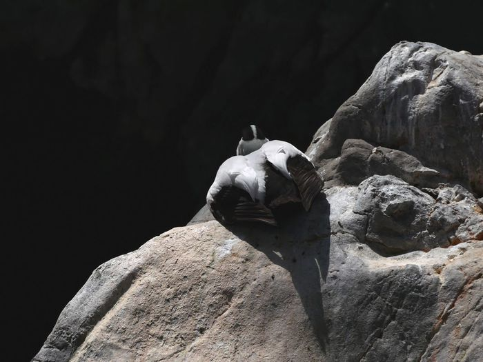 Close-up of statue on rock