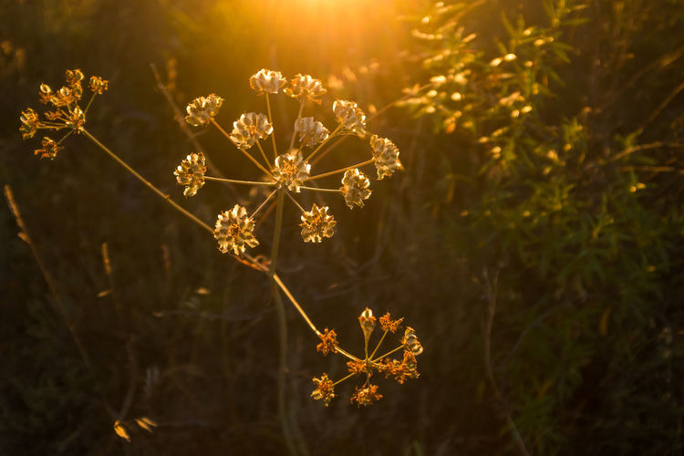 Sunrise Sun Flower Growth Light And Shadow X100S Beauty In Nature Daydream Sunny Vacations Holiday No People Nature Landscape Lensflare Golden Hour
