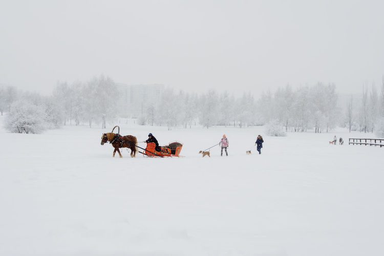 Snow Cold Temperature Winter Mammal Pets Animal Animal Themes Domestic Animals Domestic Land Group Of Animals Covering Field Beauty In Nature White Color Vertebrate Tree Nature Day Warm Clothing My Best Photo