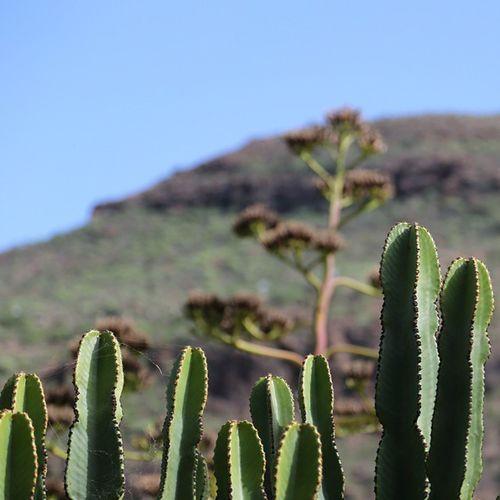 Canarias Canaryislands GranCanaria SPAIN испания канары гранканария island остров кактусы небо