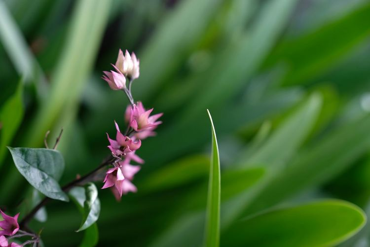 flower on a gloomy nice weather Pink Plant After The Storm Good Morning Weather Condition Green Leaves Petal Flower Head Flower Leaf Pink Color Front Or Back Yard Petal Close-up Plant
