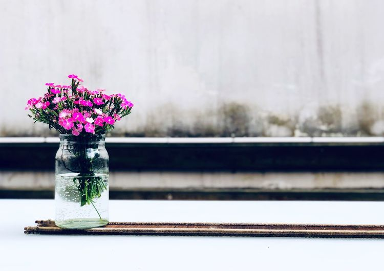 Flowering Plant No People Flower Focus On Foreground Table Vase Plant Nature Glass - Material Beauty In Nature Close-up Vulnerability  Water Day Freshness Indoors  Fragility Decoration Flower Head Purple