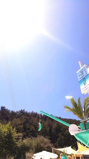 Tree Clear Sky Palm Tree Sky