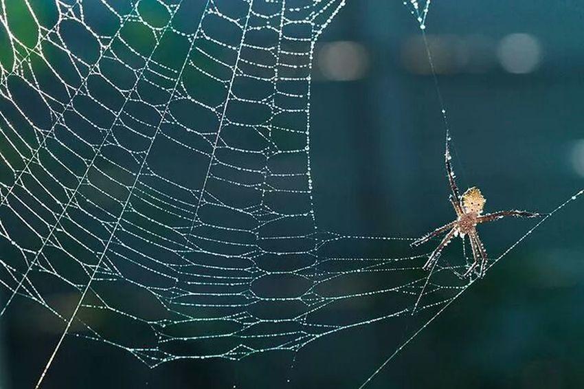 spider Macro Photography Macro Clique Macro Collection Eye For Photography