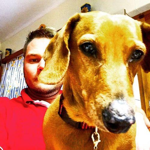 Doggy Curious Instatag POTD swakopmund ig_pets dogsofinsta petsofinsta worshond dutchhund
