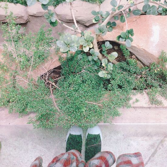 Beauty In Nature Chuck Taylor Converse Day Footwear Freshness Green Green Color Growing Growth High Angle View Human Foot Low Section Nature Outdoors Person Personal Perspective Plant Shoe TakeoverContrast