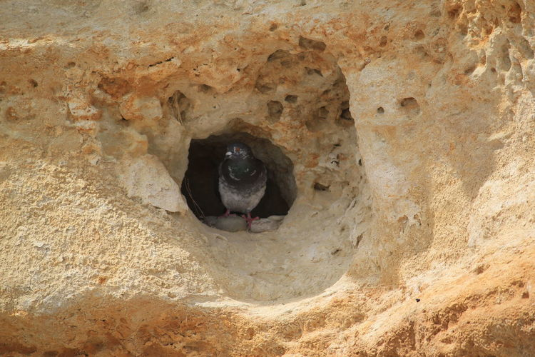 pigeon-holed !!! Beach One Animal Animal Head  Full Frame Pigeon Holes