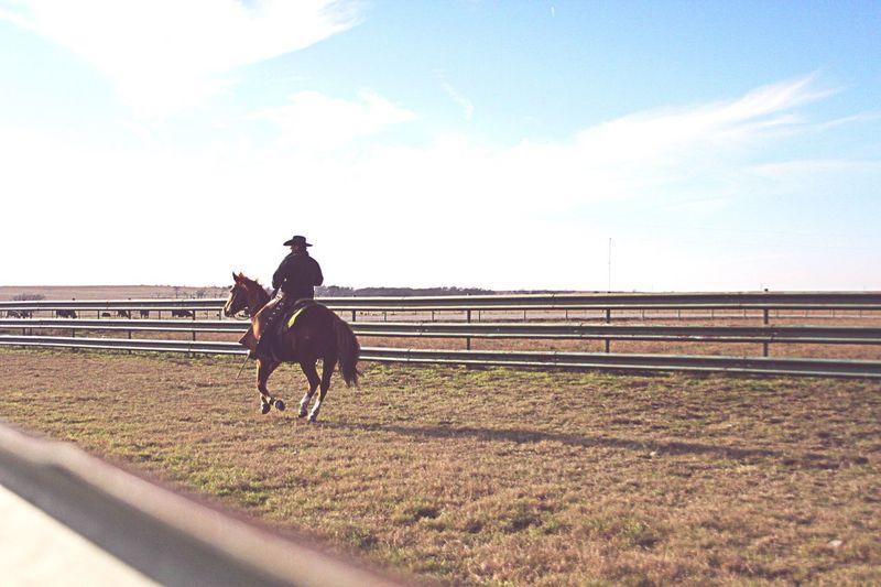 Texas Cowboy Horse Horseriding