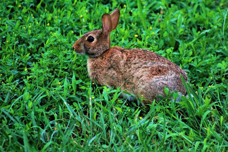bunny at the farm Animal Themes Animal Wildlife Animals In The Wild Bunny  Day Field Grass Mammal Nature One Animal Outdoors Rabbt
