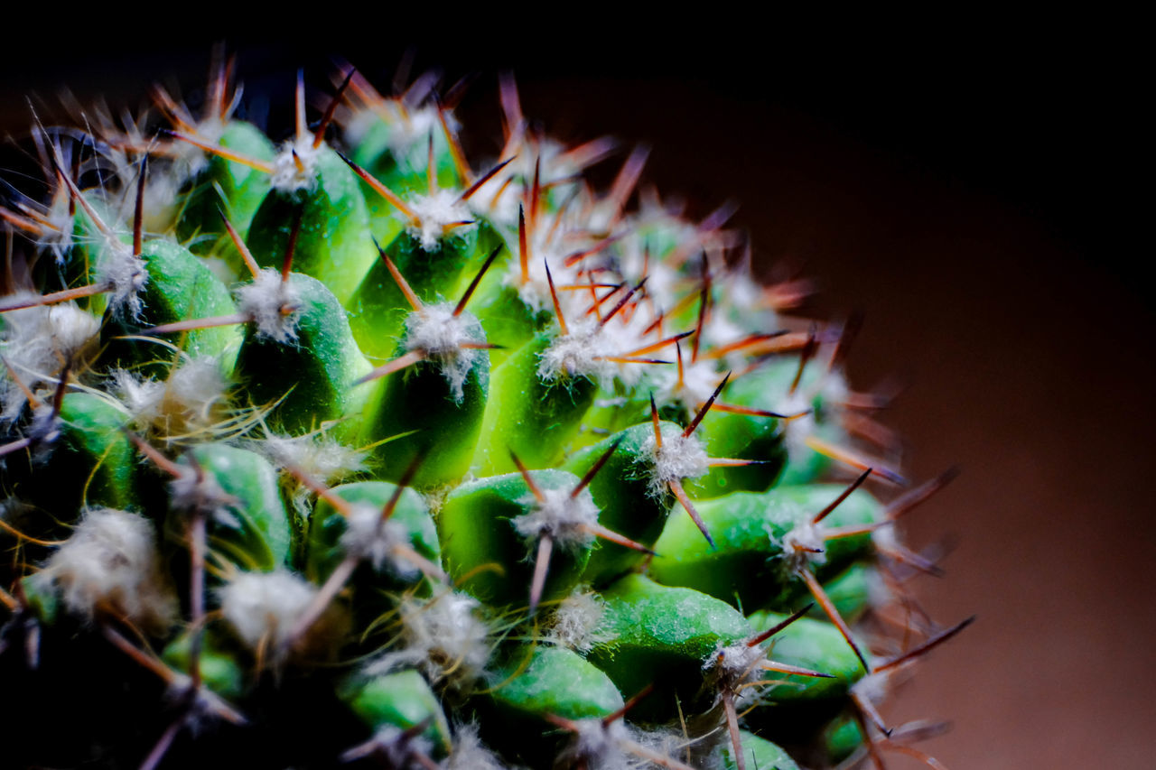 growth, cactus, thorn, spiked, plant, nature, close-up, green color, no people, beauty in nature, outdoors, day, freshness