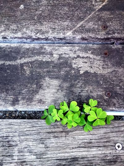 Close-up of leaves on wooden wall
