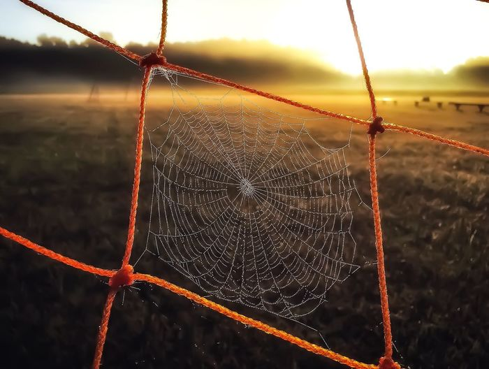 The lair of the backup goalkeeper. 🕷 ⚽️ 🥅 Oranje Spider Web Orange Color Textures And Surfaces Outdoors Soccer Morning Web Goal Beauty In Nature Autumn Fog Stillness Taking Photos Nature Cloud - Sky Rural Scene Field Cuddly Walking Around Sunrise Scenics