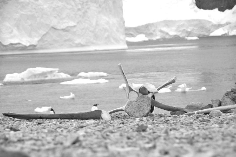 Antarctica Black And White Blackandwhite Bnw_friday_eyeemchallenge Day Land And Sea Pinguin South Pole Traveling Travelingtheworld  Vacations